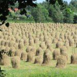 eteläsuomalaista heinäpeltoa